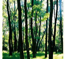 Happy Trees by Zuzana Vajdova
