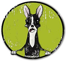 Boston Terrier Retro Pop Out Photographic Print