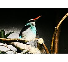 Bird at the Zoo Photographic Print