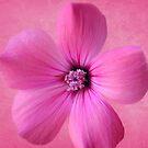 ZINNIA:  Pink Explosion by PatChristensen