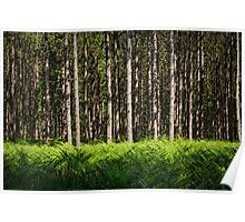 Michigan Woodland Pine Forest Poster