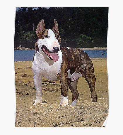 Bull Terrier Dog Portrait Poster