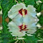 Wet Rose Of Sharon by Rick  Friedle