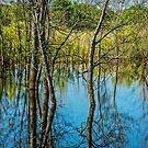 Tree Reflections in a West Michigan Pond by Randall Nyhof