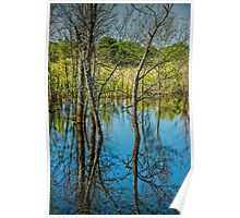 Tree Reflections in a West Michigan Pond Poster