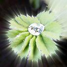 Found A Diamond by patjila