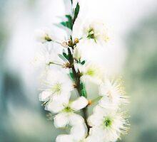 Blossom III. by Zuzana Vajdova