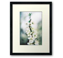 Blossom III. Framed Print