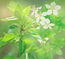 Blossom IV. by Zuzana Vajdova