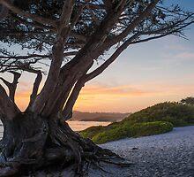 Fantastic Carmel by John Fletcher