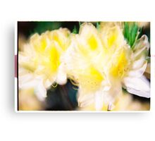 Rhododendron IV. Canvas Print