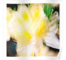 Rhododendron IV. (square) Poster