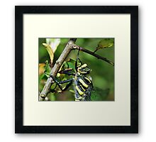 Golden Ring Dragonfly Framed Print