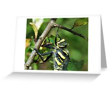 Golden Ring Dragonfly Greeting Card