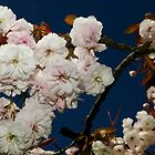 Blossom by Isenwolf