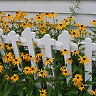 Church Fence  by Tracey Hampton