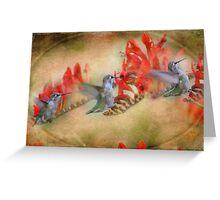 Flight Of The Hummingbird Greeting Card