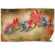 Flight Of The Hummingbird Poster