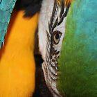 Macaw by emsta