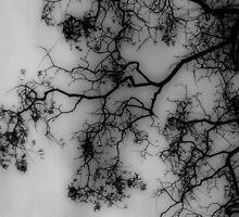 Photo 6.0: The Mirrored Heavens by R. E. Nixon