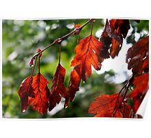 Red Leaves Poster