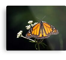 Low Key Monarch Metal Print