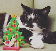 Kitten Christmas by Anne Staub