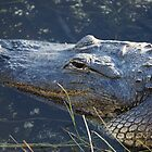 Alligator Head by Scott Dovey