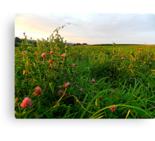 Golden Hour in a Field of Red Clover Canvas Print