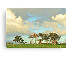 remnant red gums Canvas Print
