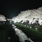 Cherry Blossoms at Night  by Patty Boyte