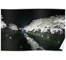 Cherry Blossoms at Night  Poster