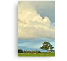 remnant red gum Canvas Print