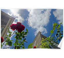 Flowers, urban area Poster