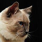 rag doll cat #2 by metriognome