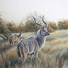 'Evening pause-Greater kudu' by steve morvell