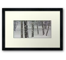 Snow-Squall -- While Walking In The Woods Framed Print