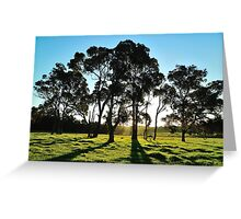 late afternoon gum trees Greeting Card
