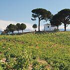 Villafranca, Spain by Mark Higgins