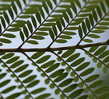 Foliage by emsta