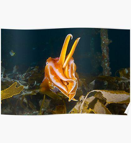 ex-HMAS Adelaide Cuttlefish Poster