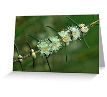 baeckea flowers #1 Greeting Card