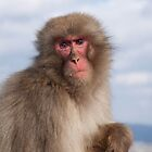 Snow Monkey by Joseph Miller