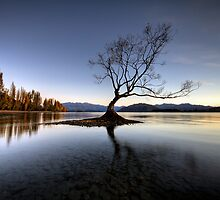 Wanaka - That Tree #2 by Brad Grove