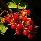 Red Raspberries by PineSinger