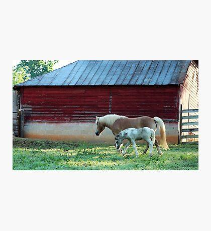 Berryvine Barn Photographic Print