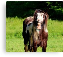 Horse Laugh Canvas Print