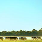 dairy herd by metriognome