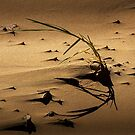 Blade of Grass on the Beach by Randall Nyhof