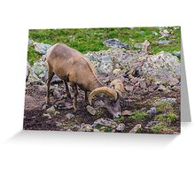 Rocky Mountain Big Horn Sheep Greeting Card